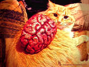 Kitty and the Brain