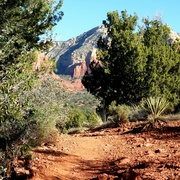 amazing trails. really vibrant green against the red rock