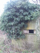 Ivy over embrasure.