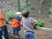 John Ball Zoo 014
