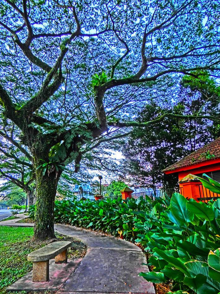 Agnes Chong·老树