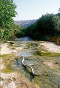 027_torrente di Cava Misericordia (iacono)
