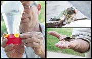 to-save-a-hummingbird