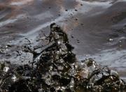 Oil spill Mosaic