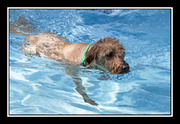 Sully in Pool