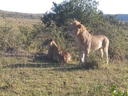 YHA Kenya Travel, Kenya Safaris, Kenya Budget Adventure Camping Safaris, Wildlife Safaris, Small Group Safaris, Holidays in Kenya, Kenya Balloon Safaris. (6)