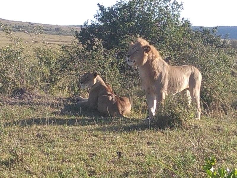 YHA Kenya Travel, Kenya Safaris, Kenya Budget Adventure Camping Safaris, Wildlife Safaris, Small Group Safaris, Holidays in Kenya, Kenya Balloon Safaris. (6)