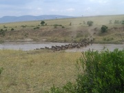 Kenya Wildebeest Migration Safari, YHA Kenya Travel Packages.