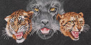 Panther-Tiger-Leopard