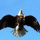 Aguila ascendiendo