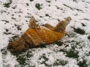 Jenny im Schnee