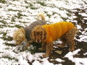 Max und Jenny im Schnee