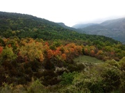 Autumn colours in the Alps