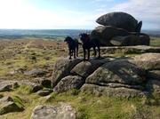 Dog heaven on Dartmoor
