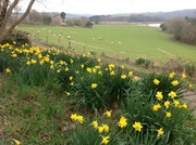 Spring in the Tamar Valley Cornwall