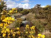 A Leat on Dartmoor in spring