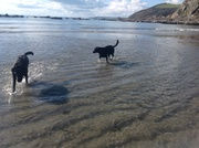 Dog heaven on Port Wrinkle beach