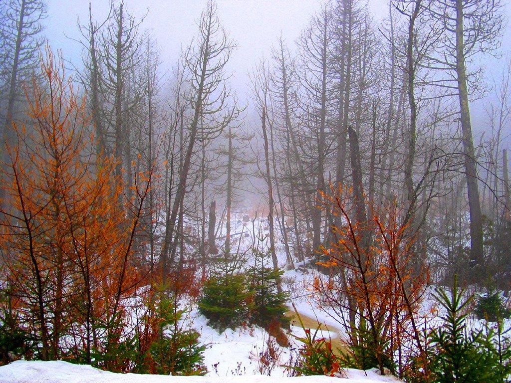 *Nieblas de Invierno II*