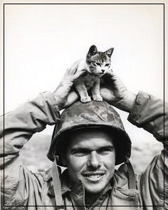 gatito de Suribachi