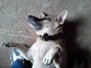 My Litle Dog