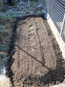 New Asparagus bed .