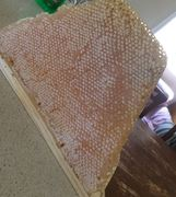 Getting better at this honey harvest thing