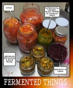 Fermented Things