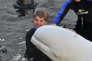 AC beluga whales