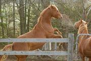 horsegames