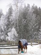 Tolare winter 2008