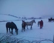 Winter 2010 025