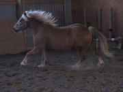 Filou cantering with long strides