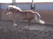 Filou galloping