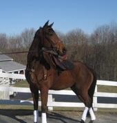 New England Equestrians