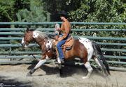 working the western horse