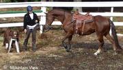 Training the extreme cowboy horse bitless