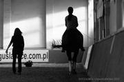 Dressage Clinic Poland