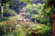 My Garden...Once