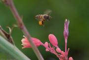 Beeswork