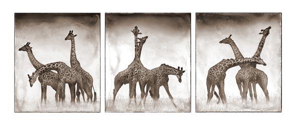 giraffes triptych