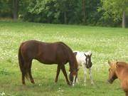 baby horse 005