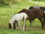 baby horse 008