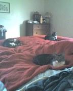 My 3 kittens