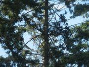 Wheel in tree
