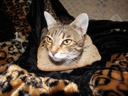 Well-Bread cat