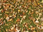 autumn in my back yard 117