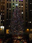 Rockafellar Center Chrismas Tree Dec 2012