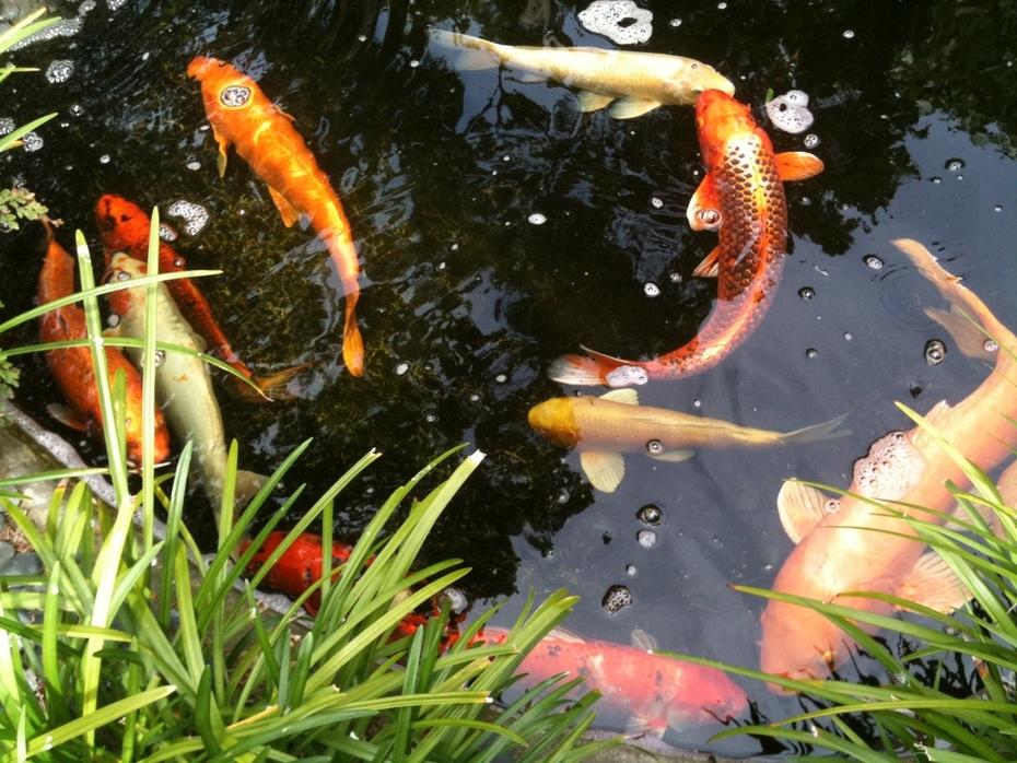 Self Realization Fellowship - Meditation Garden, Encinitas CA