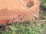Combate de malezas en Jatropha curcas