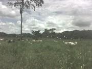 Plantex Guatemala